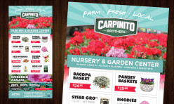 Carpinito Brothers Advertisement Design